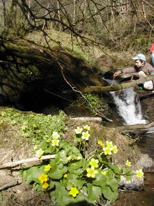 Ruisseau du Verni à Calvinet
