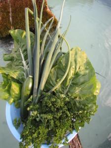 Légumes du jardin pour un pounti