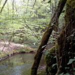 Le bord du Célé où vivent des moules perlières