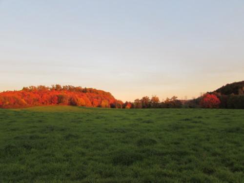 Bois de chênes rouges à la Rouquette, au crépuscule