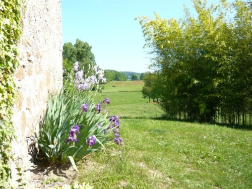 Les iris le long du mur du Gîte de la Rouquette