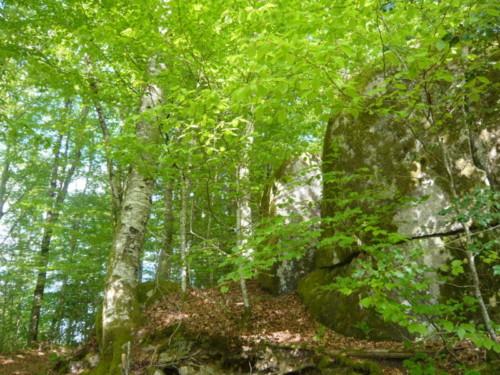 Les mégalithes dans les bois de la Rouquette