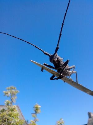 Morime ou capricorne, famille des coléoptères