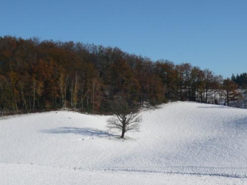 Un fort ensoleillement hivernal dans le cantal