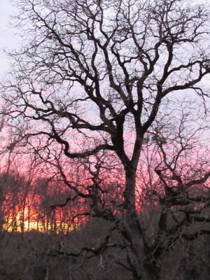 coucher de soleil derriere le grand noyer gite de la Rouquette